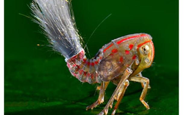 החרקים החדשים שהתגלו ביער הגשם בסורינאם (צילום: טרונד לארסן / discovery.com)