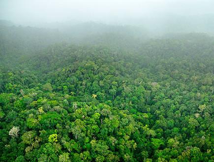יער הגשם בסורינאם