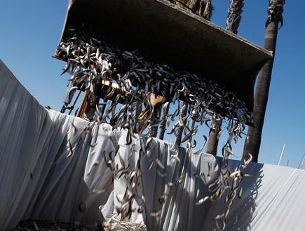 דגים מתים (צילום: David McNew, GettyImages IL)