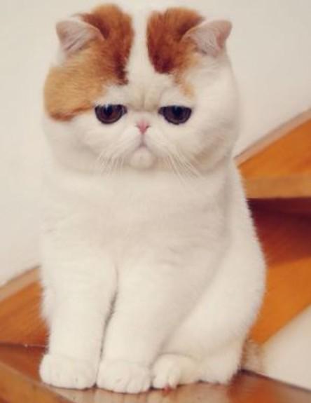 להפליא זה כנראה החתול הכי חמוד בעולם WN-25