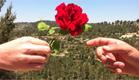 לא רק רומנטיקה - הנשיקה היא גם אמצעי (צילום: ערן בריינר)