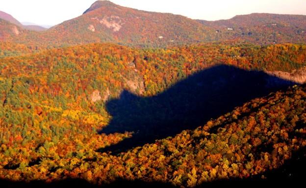 צילו של הדב (צילום: americanforests.org)