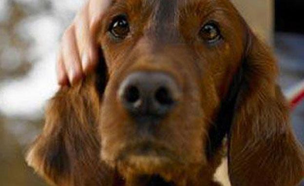 """טיפול ע""""י בעלי חיים - באקדמיה (צילום: טלרגרף)"""