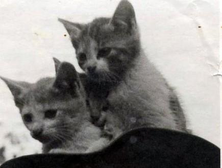 נאצים עם חתולים