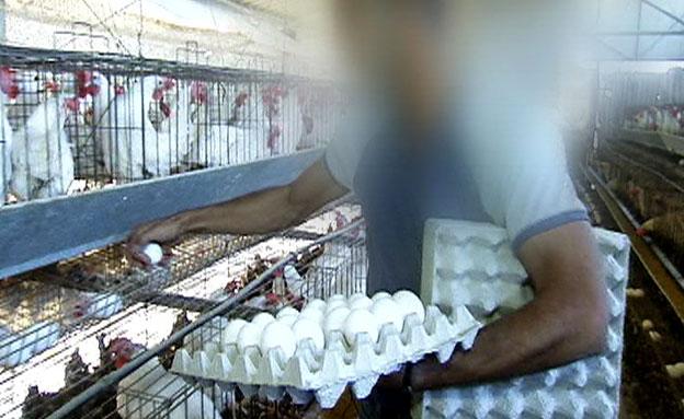 תחקיר המזון: חומר מסרטן בביצים (צילום: חדשות 2)