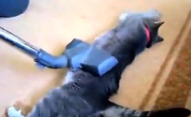 חתול מתנקה בשואב אבק (צילום: יוטיוב)