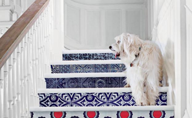 שדרוג מדרגות, כלב (צילום: www.serenaandlily.com)