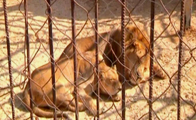 פאג'ר וסג'יל מתו היום (צילום: חדשות 2)