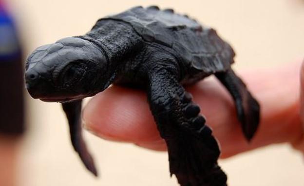 חיות בגודל כף יד