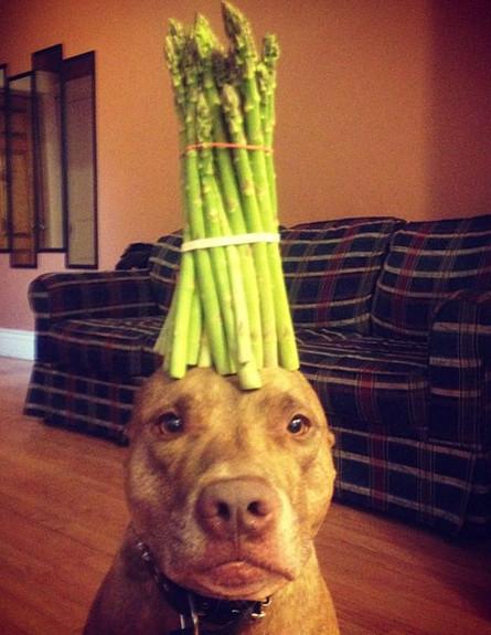 הכלב הסבלני ביותר בעולם