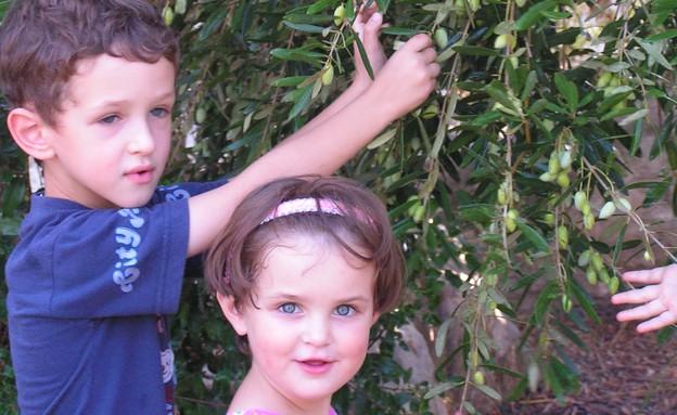 פעילות חנוכה בחצר עין שמר (צילום: באדיבות עמותת תיירות כרמלים)