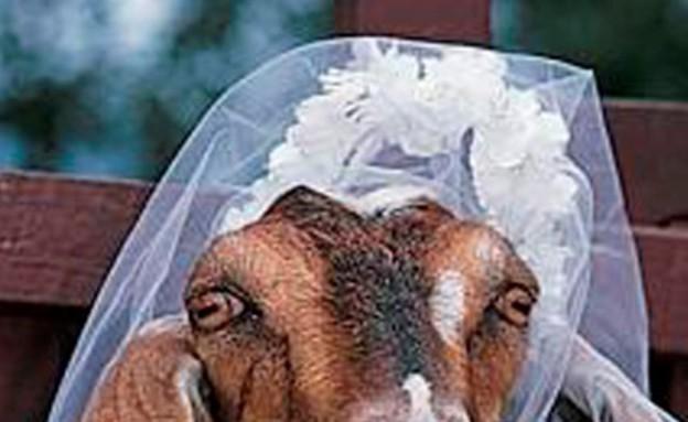 התחתנו עם חיות (צילום: oddee.com)