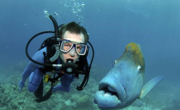 הדג שעוקב אחריו (צילום: dailymail.co.uk, noon)
