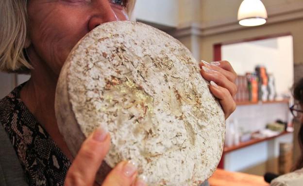 גבינות אנושיות (צילום: Sissel Tolaas and Christina Agapakis)