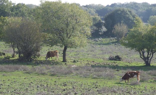 פיקניקים חורפיים, יער אודם (צילום: איל שפירא)
