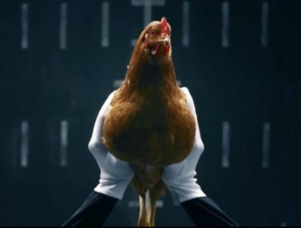 קרב תרנגולים בין מרצדס ליגואר