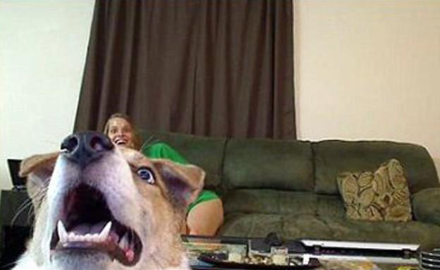 כלב מופתע בסקייפ (צילום: ג'סטין ג'ונס)