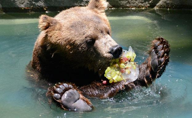 גן חיות בברזיל (צילום: AP)
