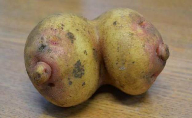 תפוח אדמה ציצים (צילום: http://metro.co.uk)