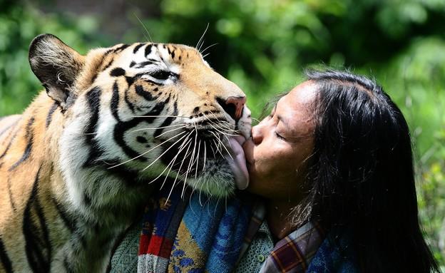 נמרה מנשקת (צילום: Robertus Pudyanto, GettyImages IL)