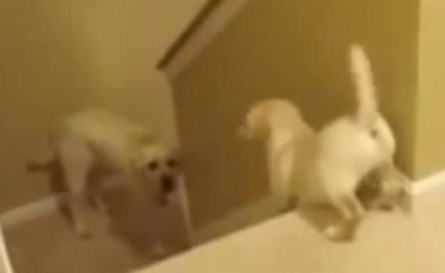 כלב במדרגות (צילום: יוטיוב)