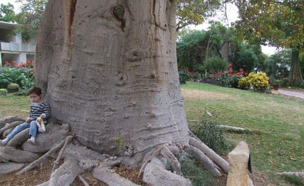 הגן הבוטני בעין גדי (צילום: איל שפירא)