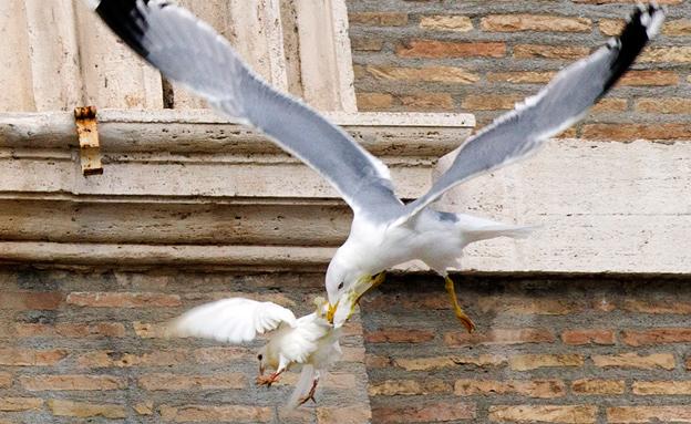 יוני השלום של האפיפיור הותקפו ברומא (צילום: רויטרס)