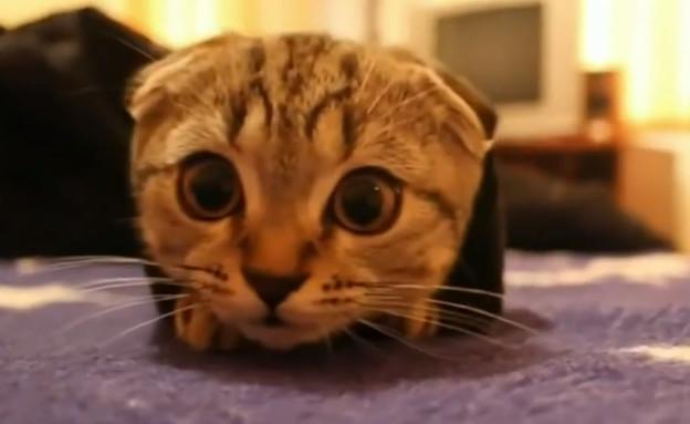 סרטון חתולים (צילום: צילום מסך מתוך Youtube)