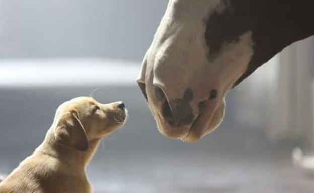 אהבת כלבלבים (צילום: צילום מסך מתוך youtube)