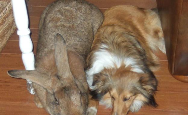 ארנב ענק (צילום: טוויסטד סיפטר)