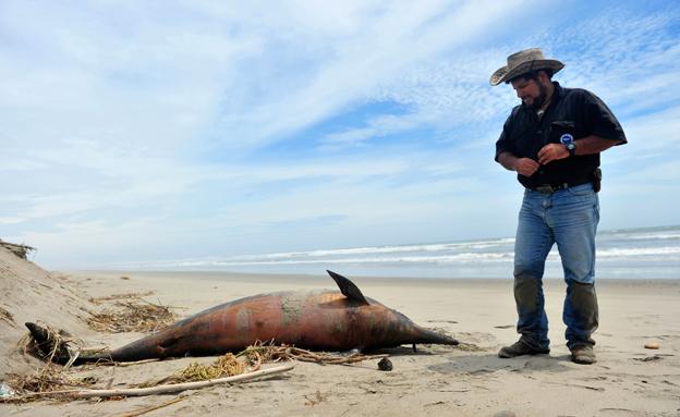 בפרו לא מבינים מה גורם למות הדולפינים (צילום: רויטרס)