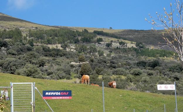 גן עדן לשוורים, סן לורצו, פינות סודיות, קרדיט לירו (צילום: לירון מילשטיין)
