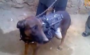הכלב שנפל בשבי הטאליבן (צילום: news@Youtube)