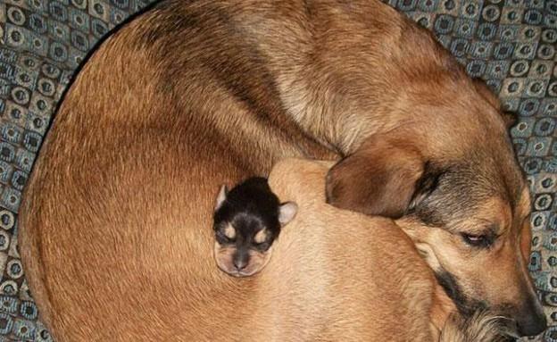 כלב וגור מחובקים (צילום: reddit)