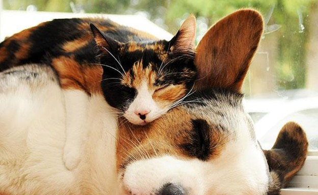 כלב וחתול מחובקים (צילום: SilverblueCat)