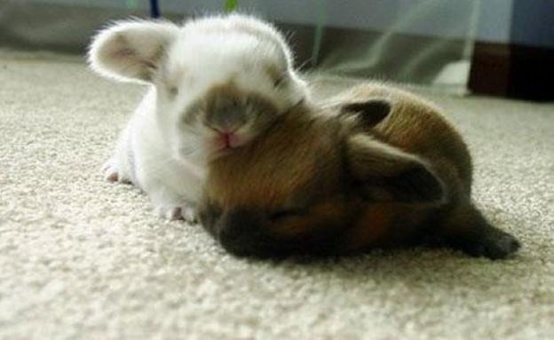ארנבים מחובקים (צילום: cutestpaw.com)