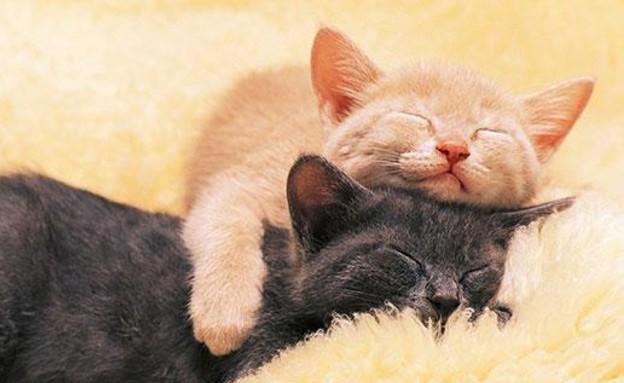 חתולים מחובקים