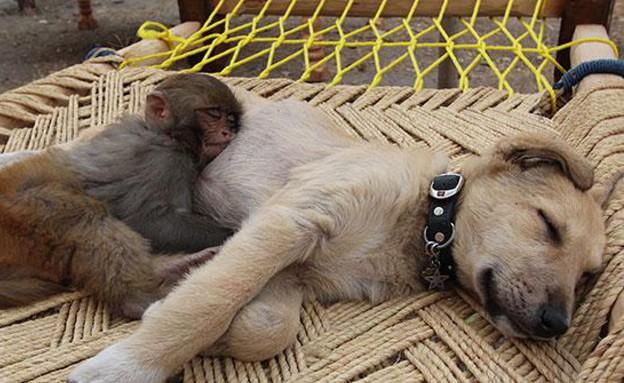 כלב וקוף מחובקים (צילום: deviantart.com)