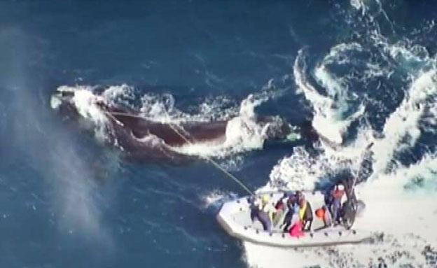 חילוץ נועז בלב ים (צילום: cnn)