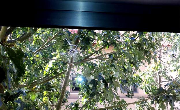 החרירים בחלון (צילום: באדיבות מעון אקים)