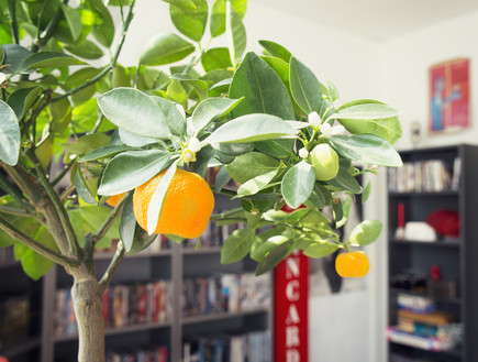 ג'ודית דה גרף, חדר עבודה צמח