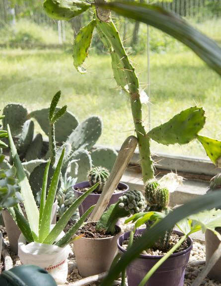 ג'ודית דה גרף, חממה צמחייה גובה