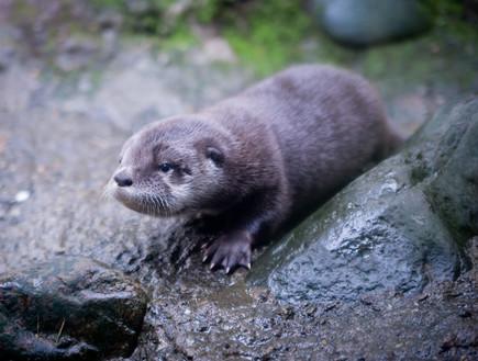 לוטרה בגן החיות של אורגון, הכי בעולם 2