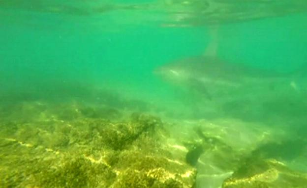 כריש (צילום: חדשות 2)