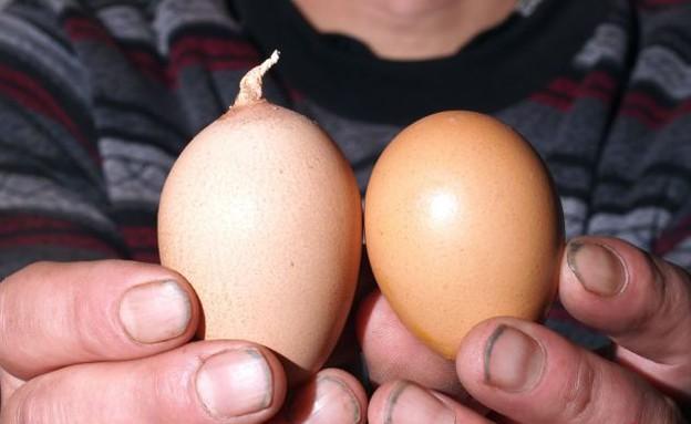 ביצה עם זנב (צילום: dailymail.co.uk)