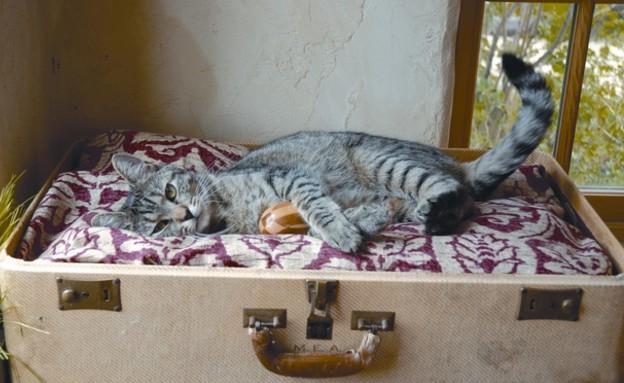 motherearthlivingפטנטים ממוחזרים, מיטת חתול (צילום: motherearthliving)