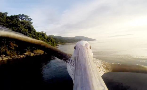 שקנאי לומד לעוף (צילום: יוטיוב)