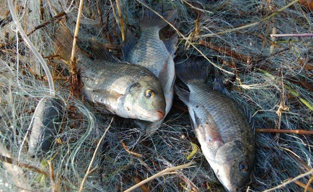 דיג לא חוקי בכינרת. ארכיון (צילום: משרד החקלאות)