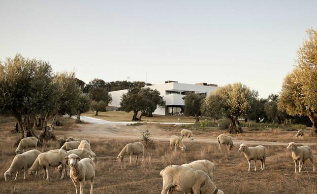 וילה בפורטוגל, חוץ עיזים (צילום: Adriá Goula)