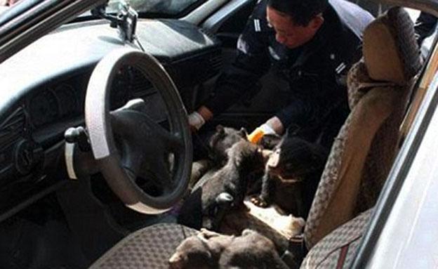 חשב שמדובר בגורי כלבים (צילום: http://www.dailymail.co.uk)